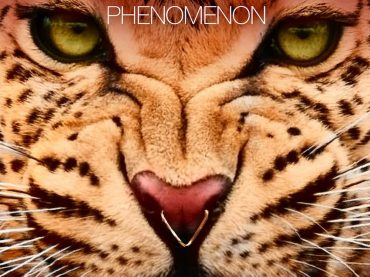 Mihalis Safras continues with his innovative and well-crafted designs on the 'Phenomenon EP'