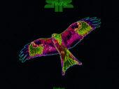 Exclusive Premiere – Exit 11 drops a huge remix of Kinobe's 'Firebird'